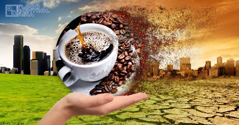 Climate change endangers the future of coffee.
