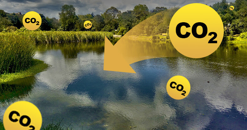 Picture of CO2 being absorbed by wetlands